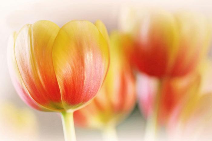 a04839518254102a گعکس گلهای زیبا و دیدنی