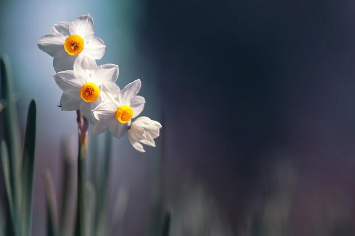 a118839518254102a گعکس گلهای زیبا و دیدنی