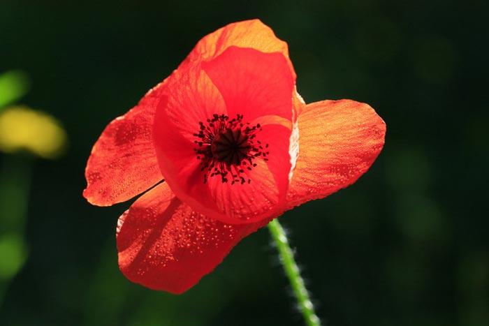 a122939518254102a گعکس گلهای زیبا و دیدنی