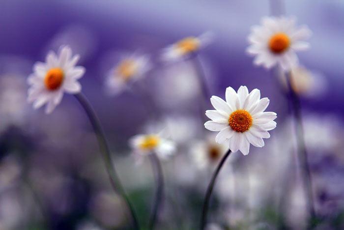 a135939518254102a گعکس گلهای زیبا و دیدنی