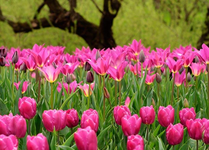 a141049518254102a گعکس گلهای زیبا و دیدنی