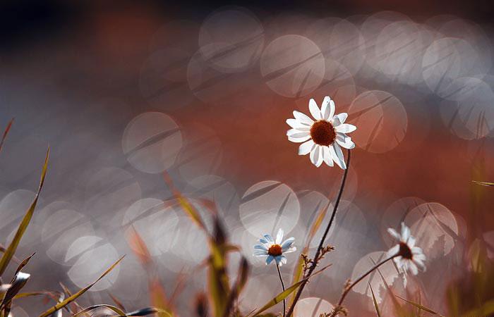 a18839518254102a گعکس گلهای زیبا و دیدنی