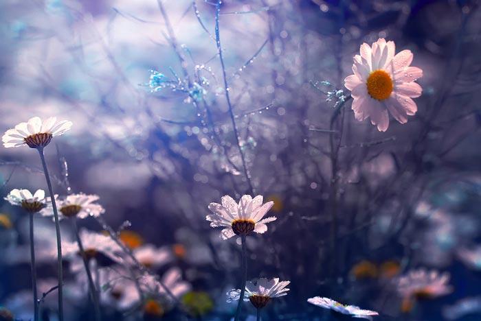 a224939518254102a گعکس گلهای زیبا و دیدنی