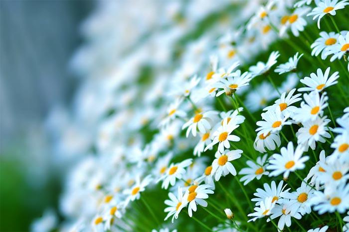 a238939518254102a گعکس گلهای زیبا و دیدنی
