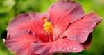 گلهایی که دیدن دارد/عکس