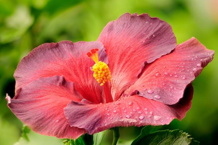a27839518254102a گعکس گلهای زیبا و دیدنی