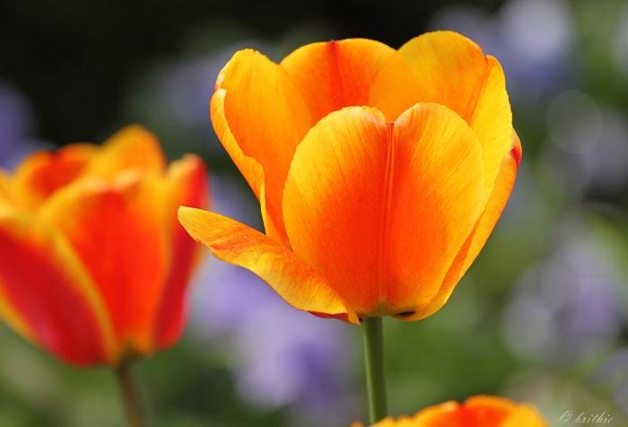a338939518254102a عکس گل های زیبا و قشنگ
