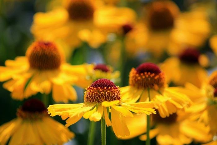 a34839518254102a گعکس گلهای زیبا و دیدنی
