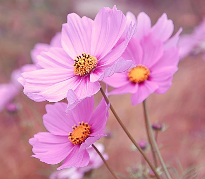 a415839518254102a عکس گل های زیبا و قشنگ
