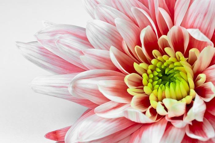 a427939518254102a عکس گل های زیبا و قشنگ