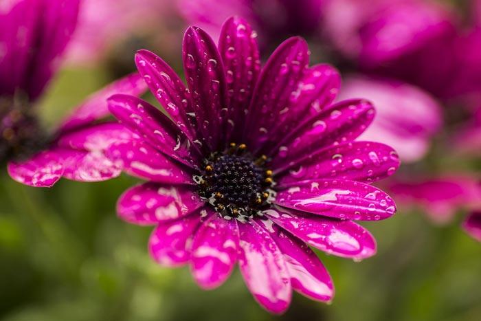 a437939518254102a عکس گل های زیبا و قشنگ