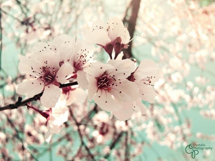 a448049518254102a عکس گل های زیبا و قشنگ