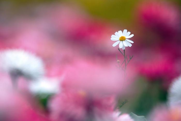 a52839518254102a گعکس گلهای زیبا و دیدنی