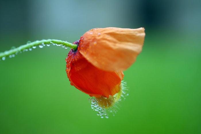 a534049518254102a عکس گل های زیبا و قشنگ
