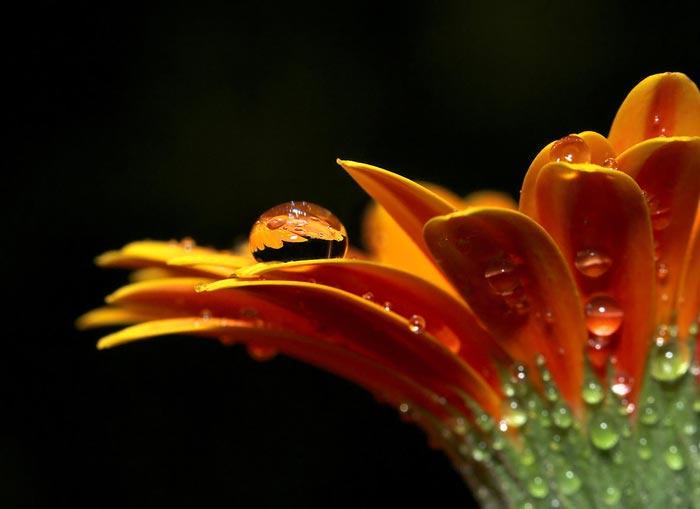 گل زيبا و جذاب