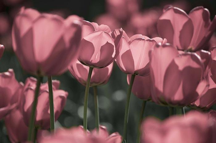 a625939518254102a عکس گل های زیبا و قشنگ