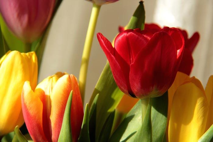 a62839518254102a گعکس گلهای زیبا و دیدنی