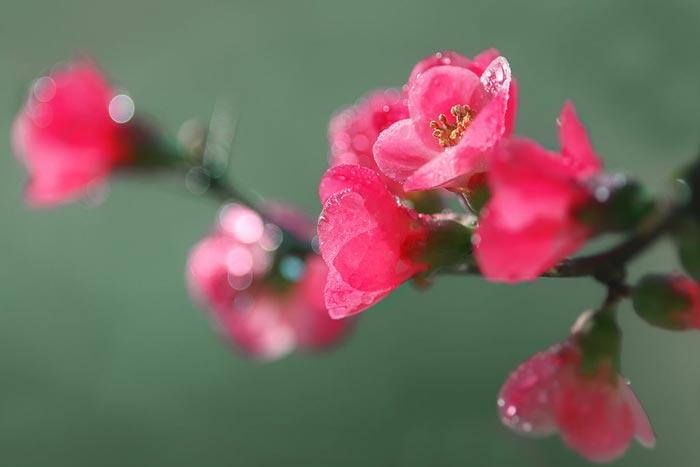 a741049518254102a عکس گل های زیبا و قشنگ