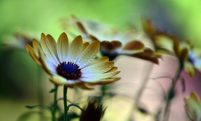 a74839518254102a گعکس گلهای زیبا و دیدنی
