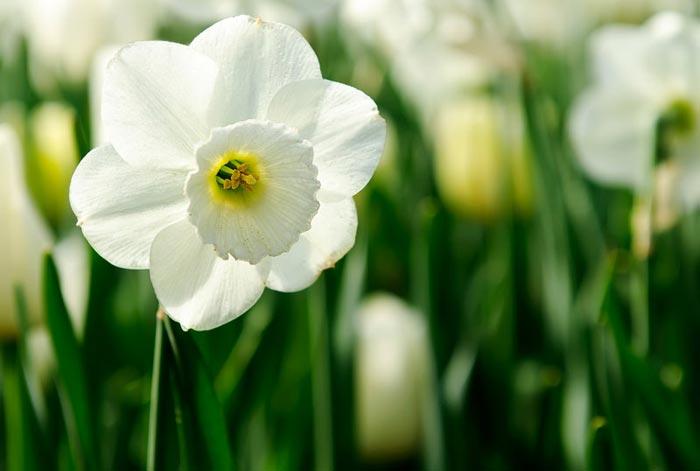 a816939518254102a عکس گل های زیبا و قشنگ