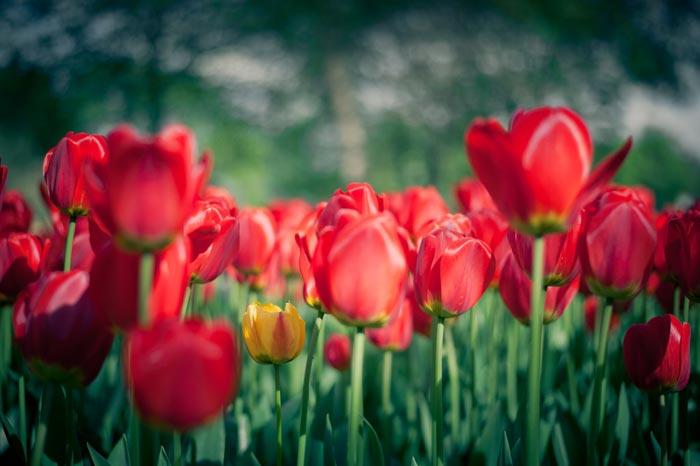 a82839518254102a گعکس گلهای زیبا و دیدنی