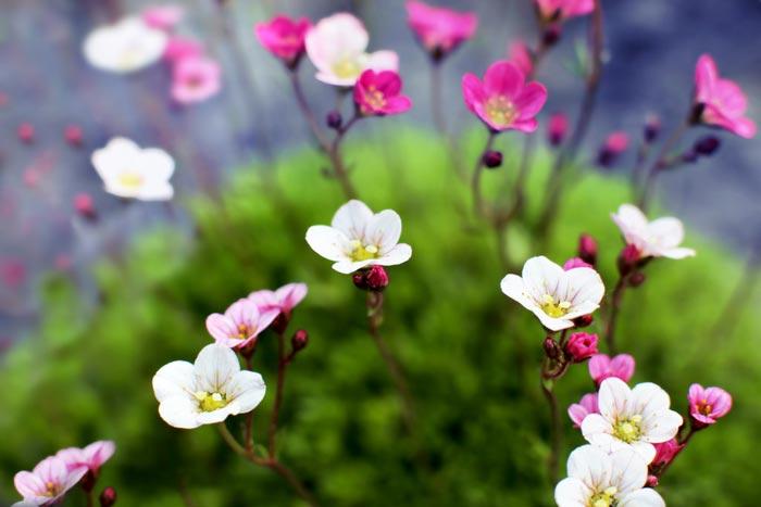 a97839518254102a گعکس گلهای زیبا و دیدنی