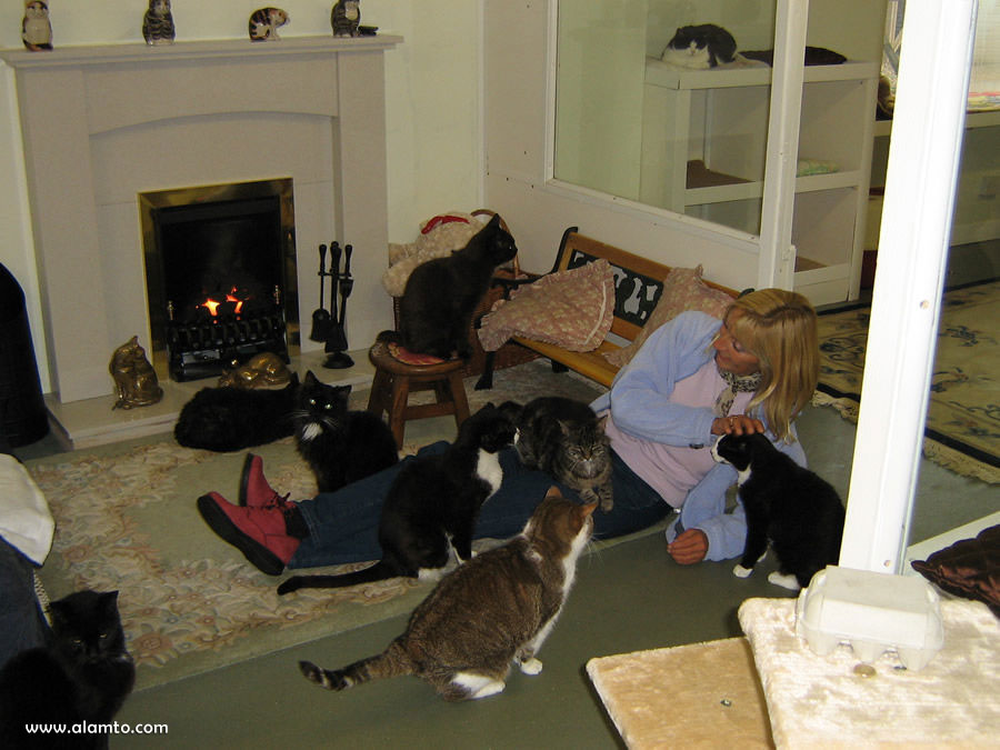 retirement-home-for-cats
