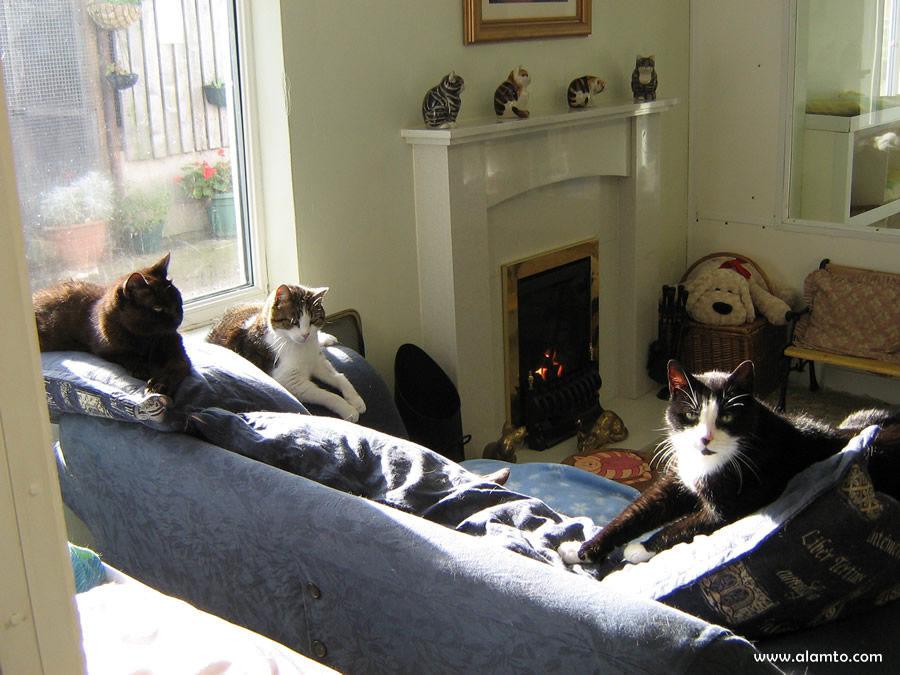 خانه سالمندان برای گربه