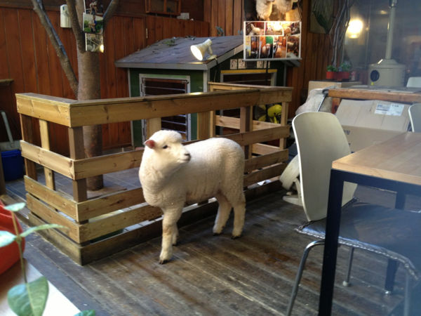 sheep-cafe