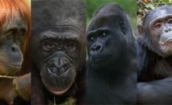 حیواناتی که خودشان را در آینه میشناسند