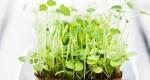 چگونه خودتان،سبزی هایتان را در زمستان پرورش دهید؟
