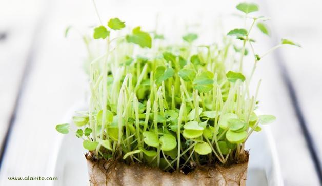 پرورش سبزی در زمستان