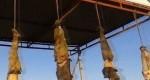 آویختن جنازهها در ورودی شهرهای داعشی