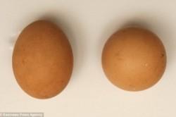 تخممرغی با ارزش ۲.۵ میلیون تومان+عکس