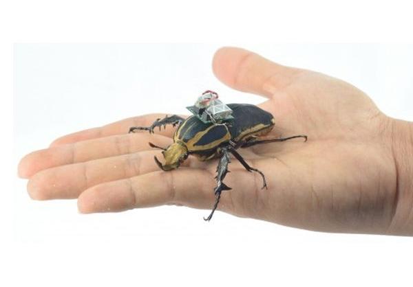 حشرات سایبورگ