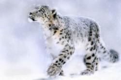 حیواناتی که به زودی منقرض میشوند+عکس