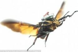 حشرات سایبورگ+عکس
