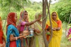 درختکاری به خاطر به دنیا آمدن دختر+عکس