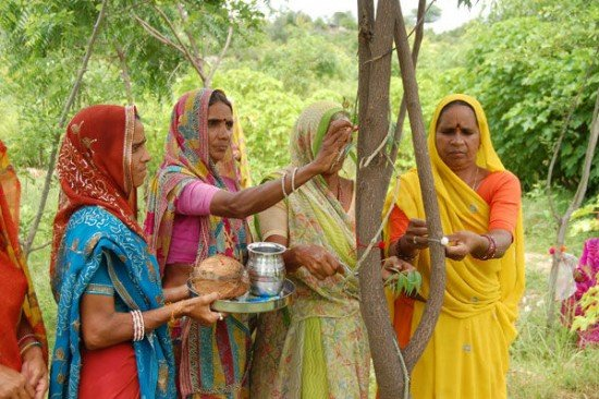 درختکاری به خاطر به دنیا آمدن دختر