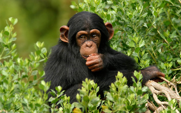 نتایج عجیب مقایسه انسان با حیوانات