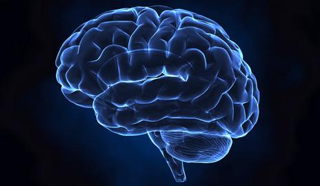 مغز بزرگتر عمر بیشتر