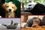 تصاویر خنده دار دنیای حیوانات وحشی