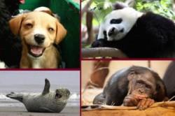 عکسهای خندهدار از دنیای حیوانات!