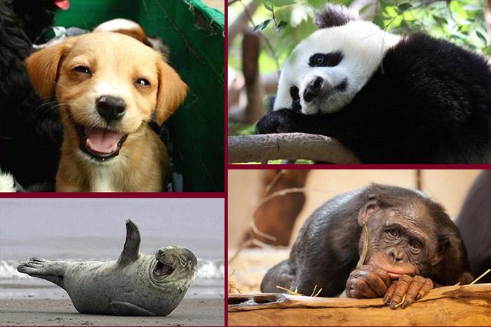 عكس هاي طنز و خنده دار از تعجب حيوانات،تصاوير فوق العاده بامزه و خنده دار حيوانات شگفت زده