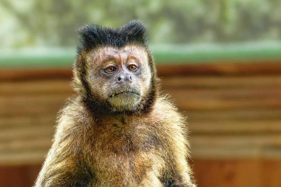 فال چینی متولدین سال میمون