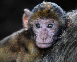 طالع بینی چینی سال میمون