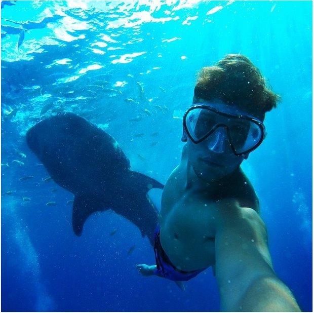سلفی با حیوانات زیر آب