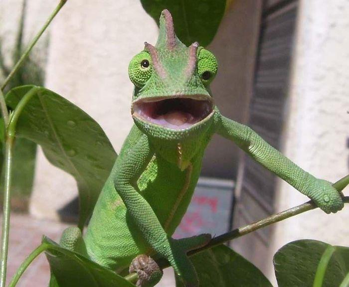 عکس های خنده دار حیوانات,تصاویر دیدنی حیوانات