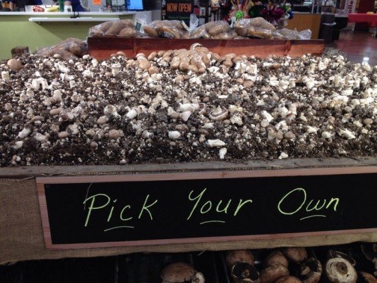 pick-your-own-mushrooms