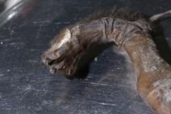 8 میلیون سگ مومیایی در معبد خدای مرگ+عکس